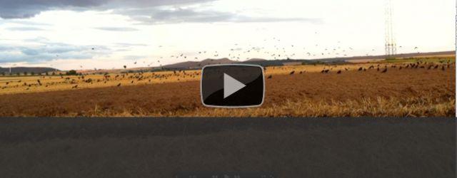 Krähensaison 2011 – Bist Du bereit? Wir sind es. Krähenjagd ist für mich mit die reizvollste Jagdart. Fordern die schlauen […]