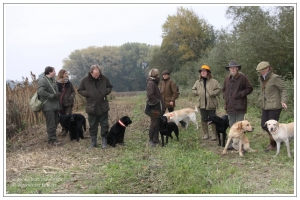 Hundeführer mit Retrievern