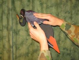 Der FUD-Lockvogel wird zusammengesteckt