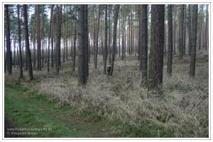 Jäger in Tarnkleidung in einem Kiefernwald