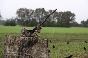 Jäger in Tarnkleidung im Tarnschirm bei der Lockjagd auf Krähen mit beflockten Decoys und Krähenmagnet