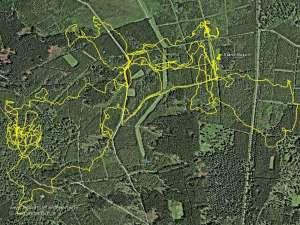 Luftbildaufnahme mit geloggter Strecke des Hundes