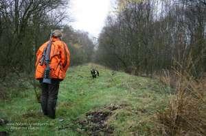 Wachtelhund läuft am Ende einer Stöberjagd auf Jägerin mit Warnjacke zu