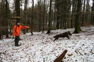 Deutscher Wachtelhund wird von Jägerin in Warntarnjacke in Blaze Orange AP zum Stöbern geschickt