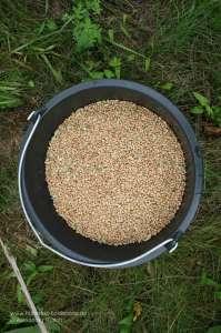 Eimer gefüllt mit Futter zum Beschicken einer Kirrung für die Jagd auf Enten