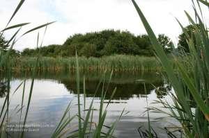 Blick auf einen See, an dem eine Entenkirrung angelegt werden soll, damit die Enten auf dem Entenstrich bejagt werden können