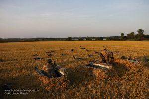 Lockbild mit Graugansatrappen, im Vordergrund die Jäger und LayoutBlinds