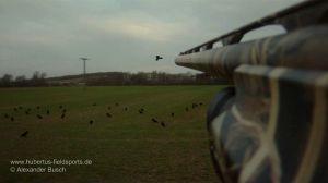 Jäger beschießt Rabenkrähe