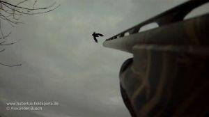 Jäger beschießt überkopf anstreichende Krähe