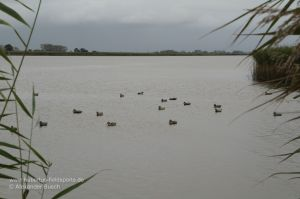Lockbild aus Enten auf dem Wasser