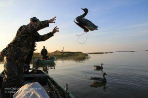 Jäger wirft Gänsedecoy über Bord