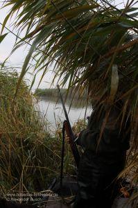 Jäger mit Flinte im Schilf