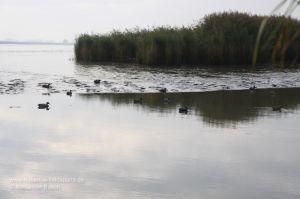 Lockbild im ablaufenden Wasser der Wesermarsch