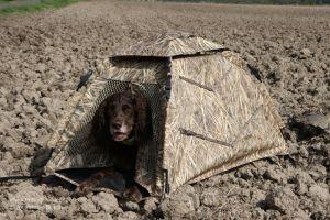 Jagdhund wartet in Tarnhütte auf Kommando