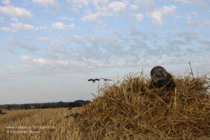 Jäger im Layout Blind wartet auf einfallende Gänse