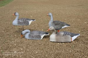 Gänse-Lockvögel auf einem Feld