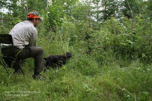 Hundeführer übt mit Jagdhund das Stöbern